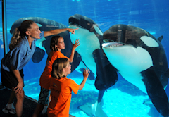 Sea World Killer Wales and Kids