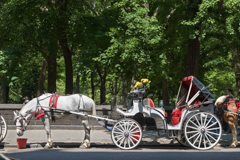Central Park Carriage New York